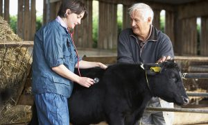 Colleges That Offer Animal Science