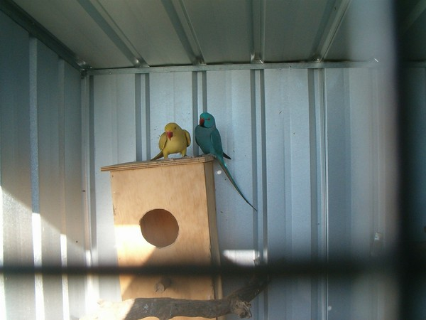 DIY Indian Ringneck Nesting Box